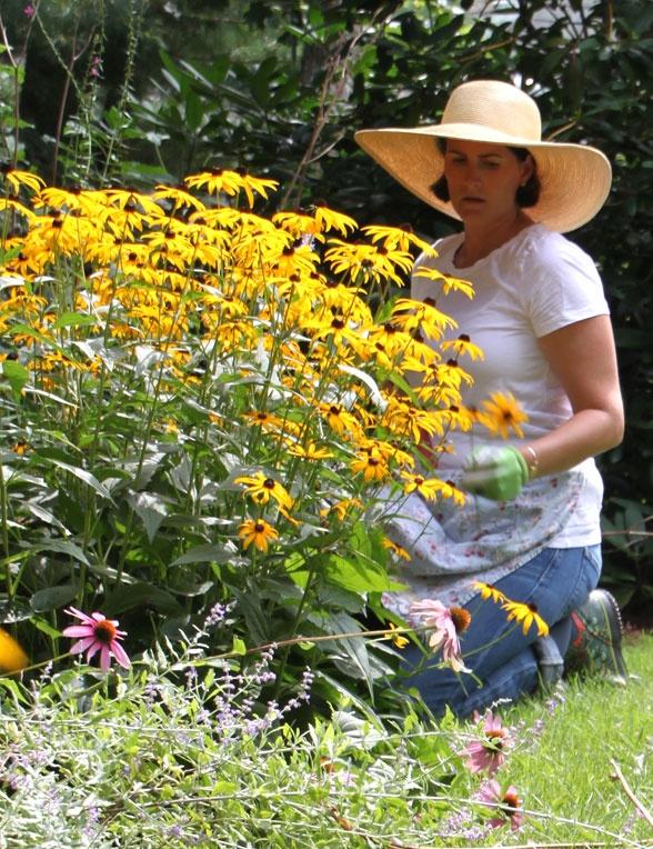 Guest Speaker: The Coastal Gardener's Top Ten PlantsCoastal Plants, Coastal Gardens, Coastal Gardener'S, Black Eye, Add Coneflower, Gardener'S Tops, Gardening Landscapes, This, Gardens Plants