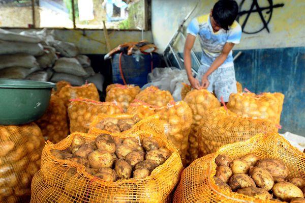 harga kentang dieng 2016