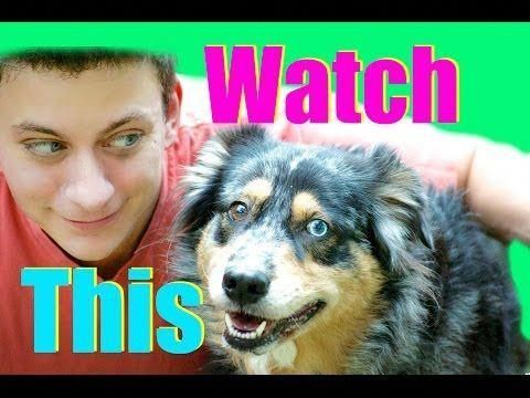 Amiable Reviewed Best Dog Training Tricks Join Today Dog