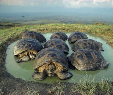 Visit the Galapagos Islands and see Giant Tortoises, Flamingo's, Blue Footed Booby's, Iguanas...