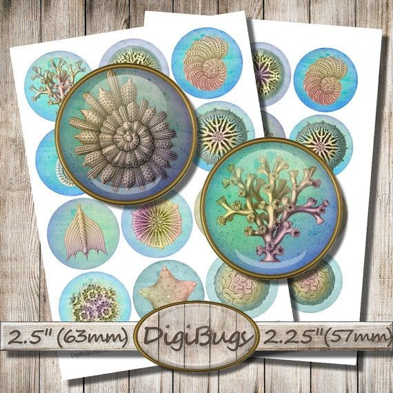 Sea Life, Digital Collage Sheet, Sea Circles, Sea Shell, Coral Images, Starfish Decoupage, Printable Images, Instant Download, b1