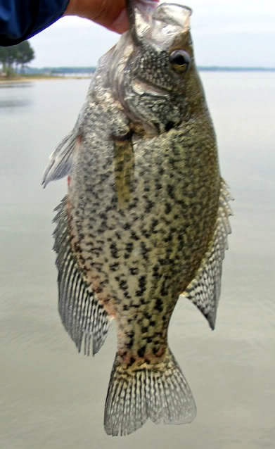 14 best images about lake tawakoni at wills point texas on for Crappie fishing in texas