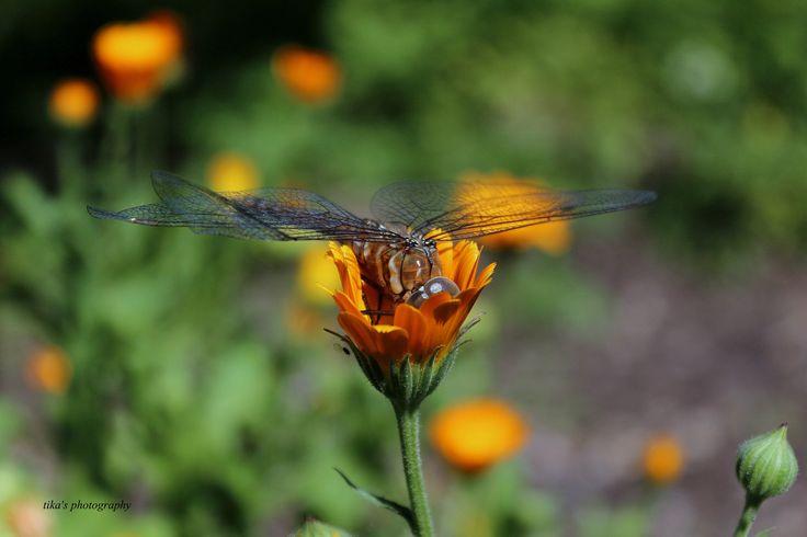 Фотография insect автор tiko gogolauri на 500px