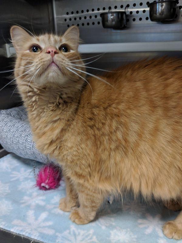 Cats For Adoption Petfinder Cat Adoption Cats Adoption