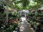 clifton nurseries - Google Search