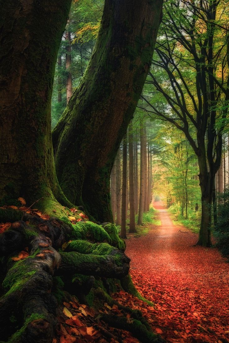 Veins of life - Speulder Forest, Netherlands. Shot with Lars Van de Goor.