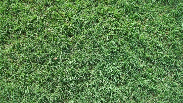 Bermuda Grass Care – If you live in the Southern climate region, you will always be able to get some good value if you opt for Bermuda grass. This delivers a very good quality all the time and the value you get is second to none all the time, which is terrific for sure. Bermuda grass care is necessary, however, you do get a great cover for the ground and the pet traffic is ok as well if you have this type of grass. Contrary to popular belief, you will see that taking care of this grass is…