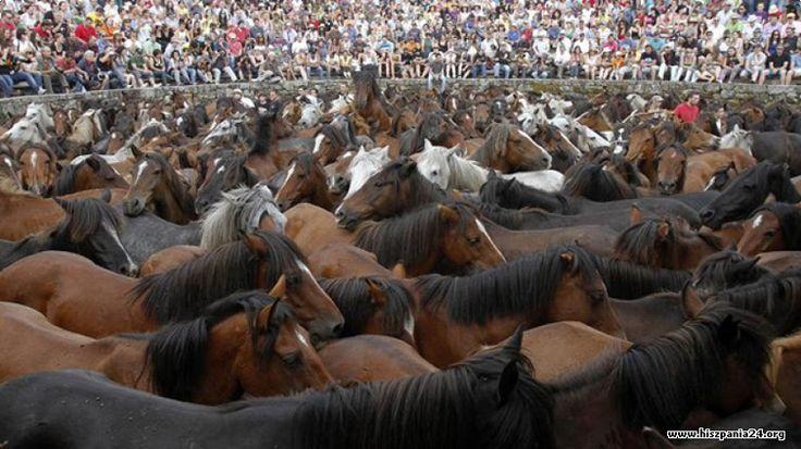 Rapa das bestas - Festiwal ujeżdżania dzikich koni Więcej informacji o Hiszpanii pod adresem http://www.hiszpania24.org/wiadomosci/rapa-das-bestas-festiwal-ujezdzania-dzikich-koni