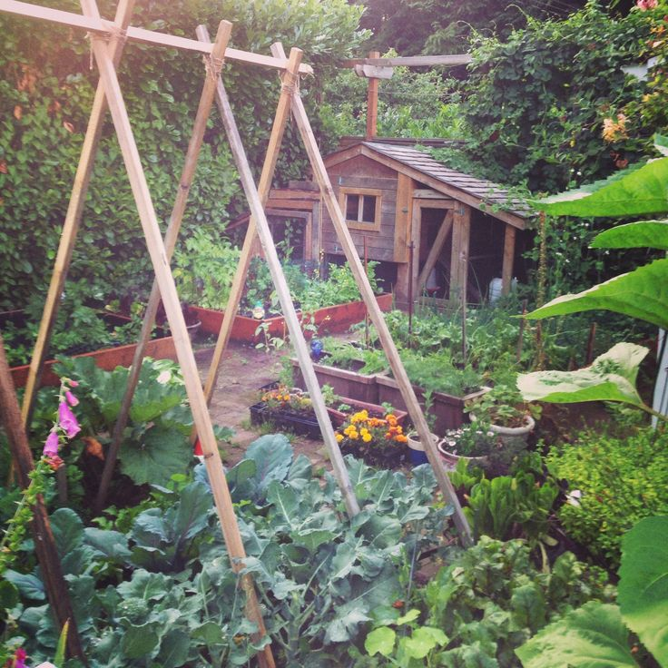 on a 1/4 acre lot in a neighborhood near downtown Olympia, Washington - Urban Garden - Lavender & Fir