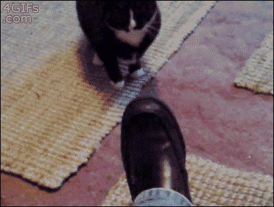 Hey Cat, Shine My Shoes. | 20 Funny CatGIFs