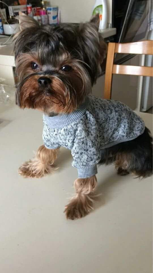 Best 25+ Cute dog clothes ideas on Pinterest