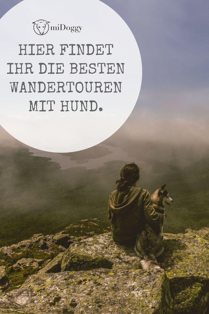 || #Hund || Ideen || #Hunde || Tipps || Tricks || Ideen || Liebe || Welpen || Bilder || #Wandern