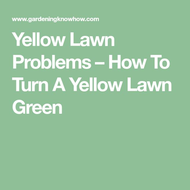 Yellow Lawn Problems – How To Turn A Yellow Lawn Green