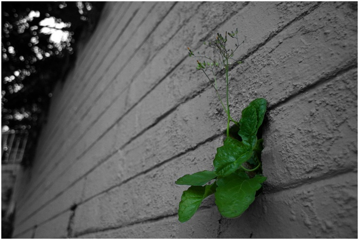 Another weed in the wall.