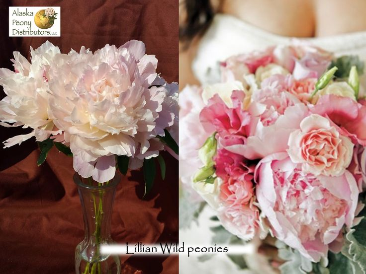 We get a lot questions about which peonies are need to make a bouquet. This  · '