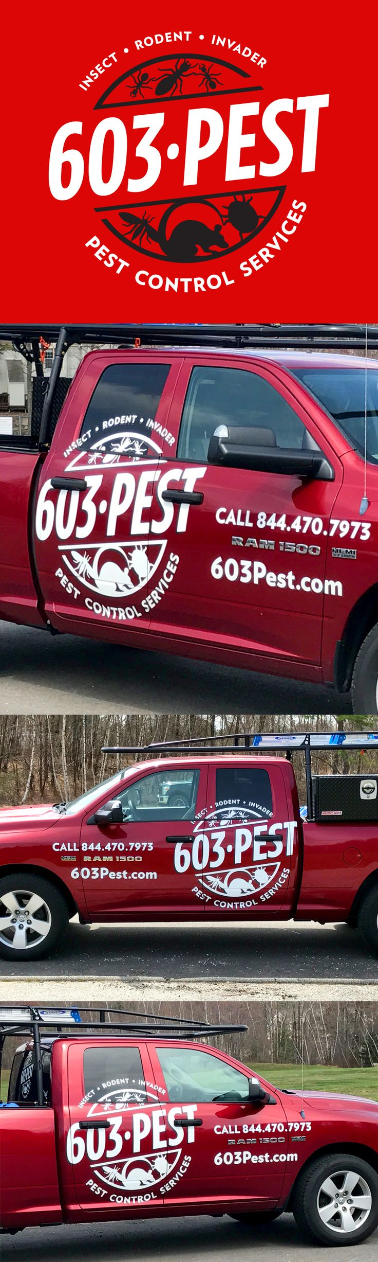 best 25 pest control services ideas on pinterest termite pest