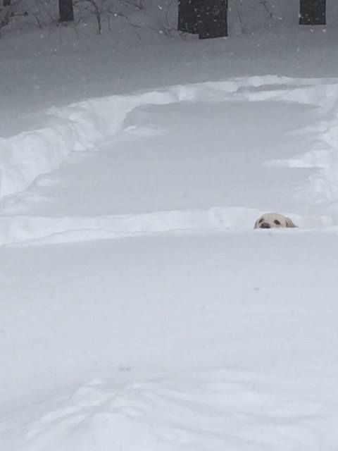 It's a dog running around in his yard after a snow storm!