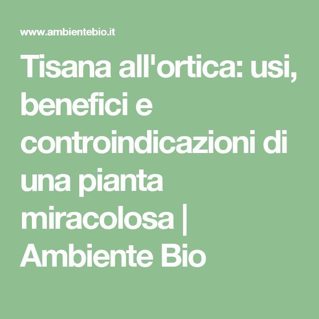 Tisana all'ortica: usi, benefici e controindicazioni di una pianta miracolosa | Ambiente Bio