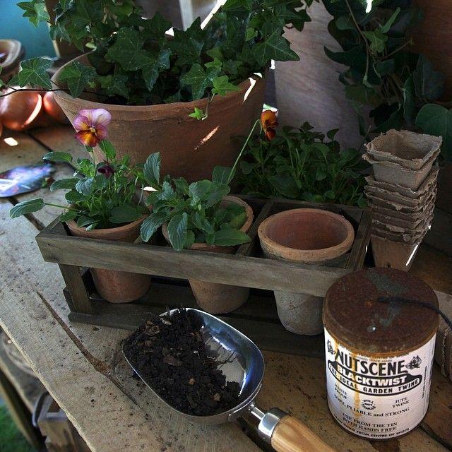 On my #pottingbench.   #autumn #brisbane #homegrown #mygarden #organic