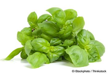 Basil nutrition facts, health benefits, healthy recipes, and other fun facts to enrich your diet.