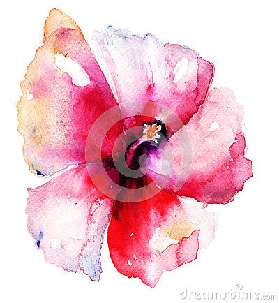Hibiscus flower, meaning of delicate beauty
