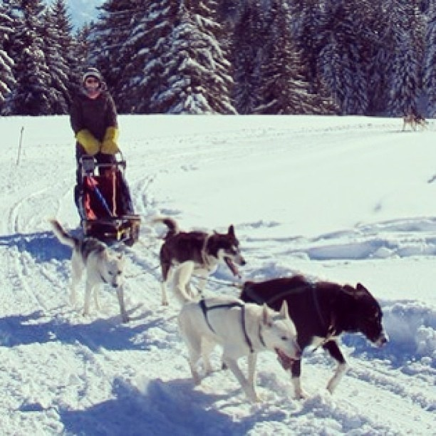 Huskytour am Flumserberg. User midnatt on Instagram.