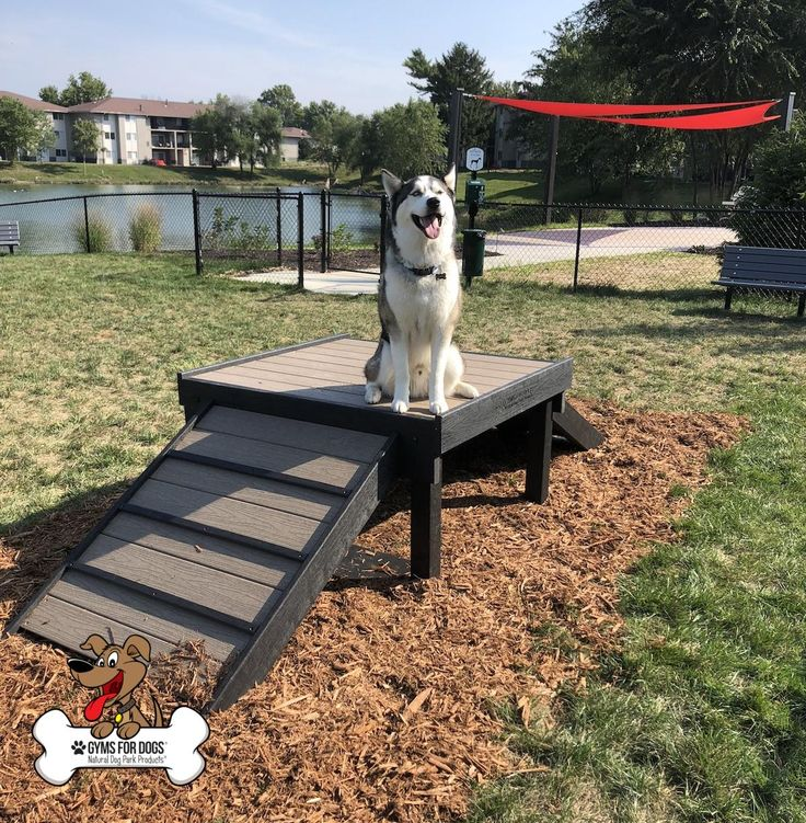 Dog Daycare Play Equipment in 2020 Dog playground, Dog