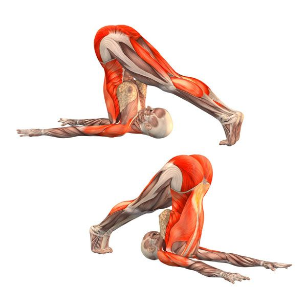 Plow pose - Halasana - Yoga Poses | YOGA.com