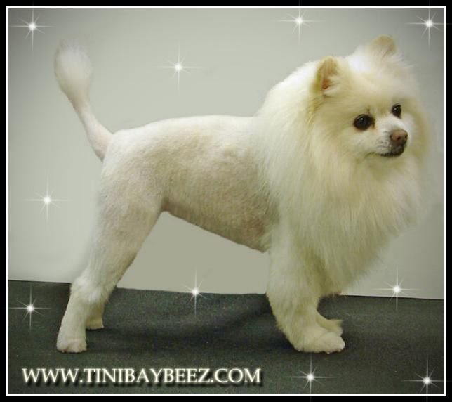 Tinibaybeez- Creative Dog Grooming by Tina Nichols in Portage Indiana USA
