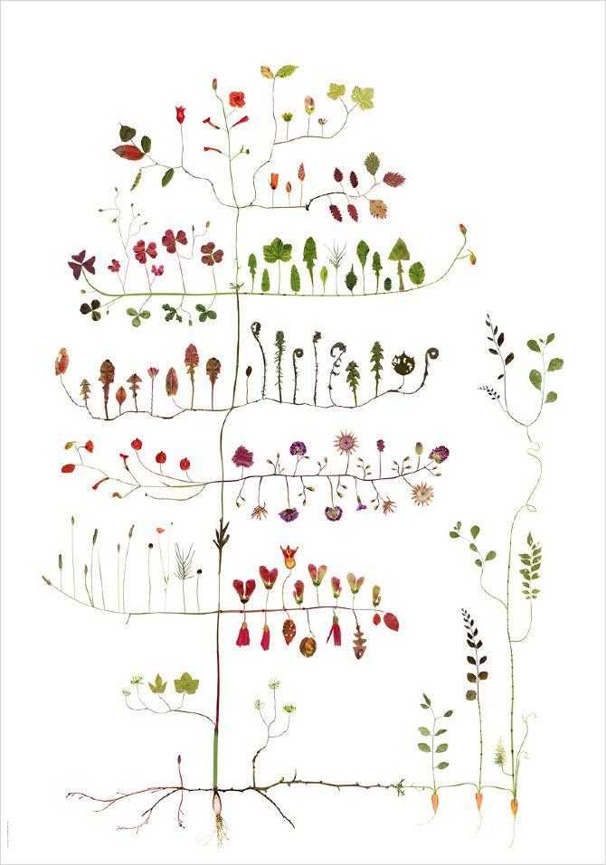Garden Tree / Trädgårdsträd NEW! - Lottas Träd/ Lottas Trees