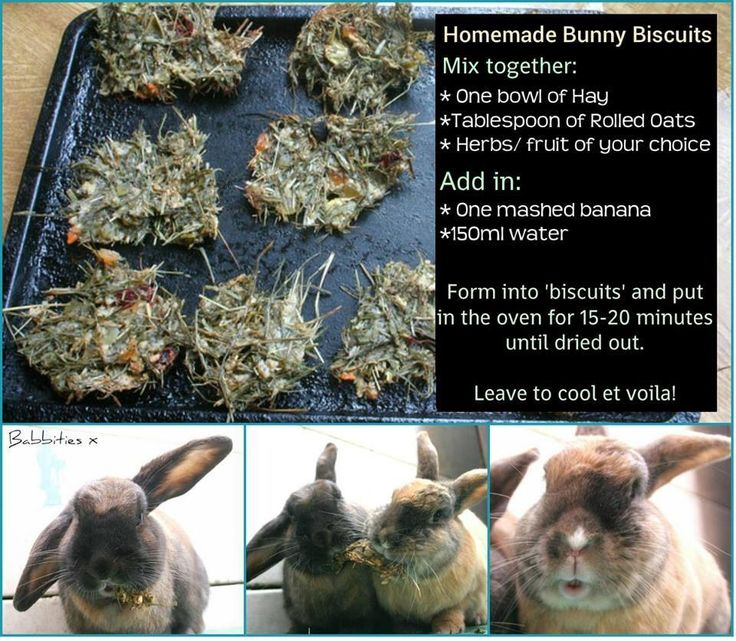 Bake your rabbit treats                                                                                                                                                     More