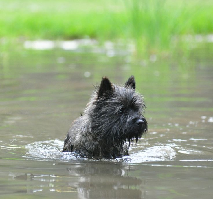 My dog hates the water so it's interesting to see photos of other dogs loving it!