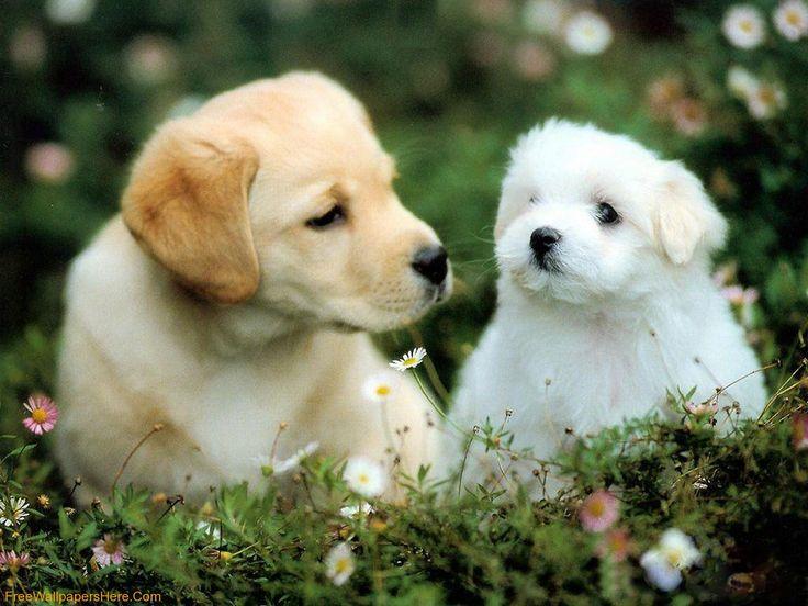 Best Cute Puppy Wallpaper Ideas On Pinterest Puppies - 29 cutest dog photos existence