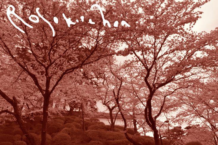 TOKYO-YOKOHAMA-FUJISAN TOUR PHOTOS