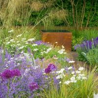 Nepea, grasses, alliums leucanthemum.jpg (200×200)