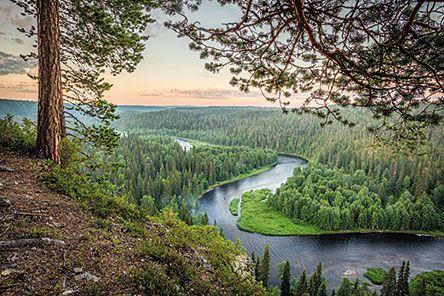 Oulangan kansallispuisto. Kuva: Mari Limnell