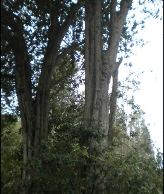 Bosque de Petras, Valparaíso.
