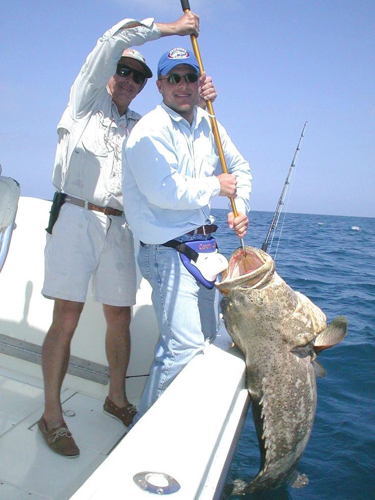 1000 images about gulf of mexico fishing on pinterest for Florida gulf fish