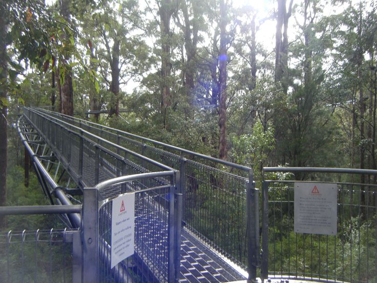 Treetop Walk at Valley of the Giants, Western Australia.