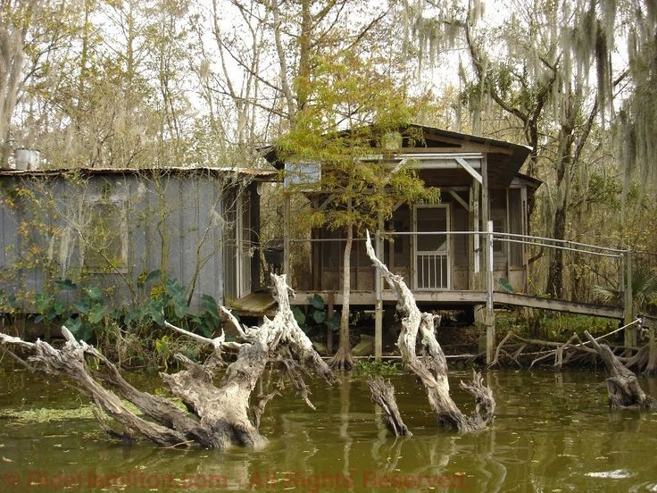 Bayou Photo Louisiana Swamp | We had a huge crawfish boil one night and some local cajun friends ...