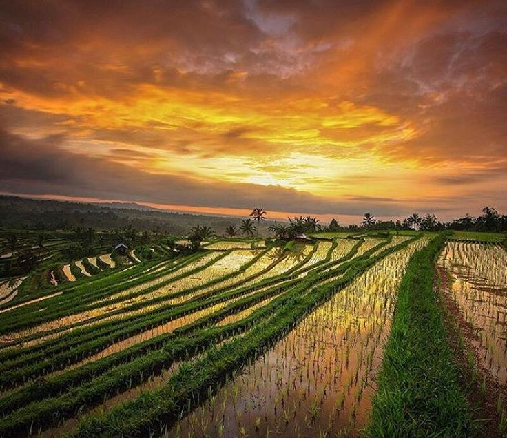 """J a t i l u w i h  Photo courtesy : @gintingefraim Photo location : Jatiluwih Rice Terraces, Tabanan, Bali  Set in the heart of the Tabanan regency in…"""