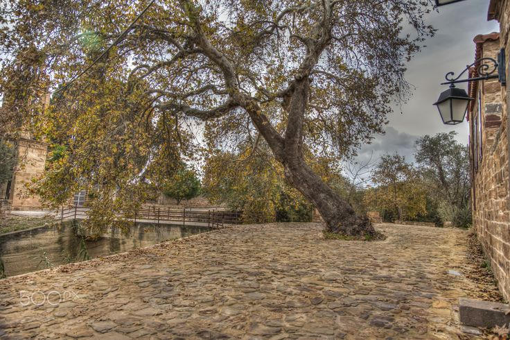 Tree - This exquisite spot is located on the island of Chios in Greece. The area is called Cambos and it reminded me of Tuscany in Italy.