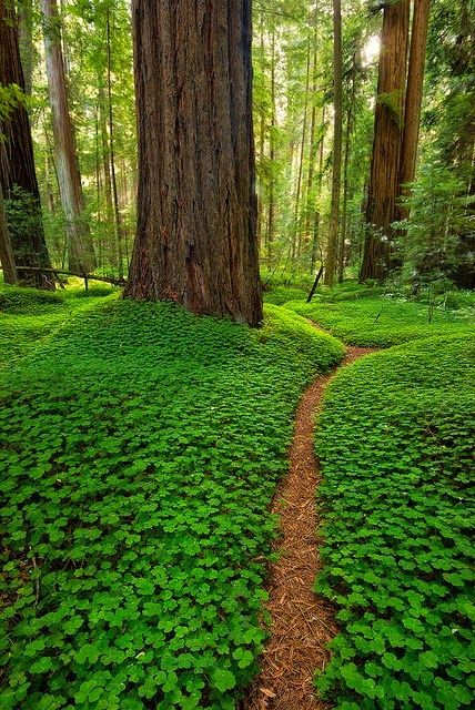 10 Amazing Natural Places to Visit in California ~ Fascinating Places