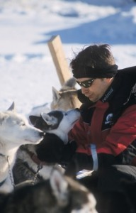 Husky dog riding is popular winter activity.