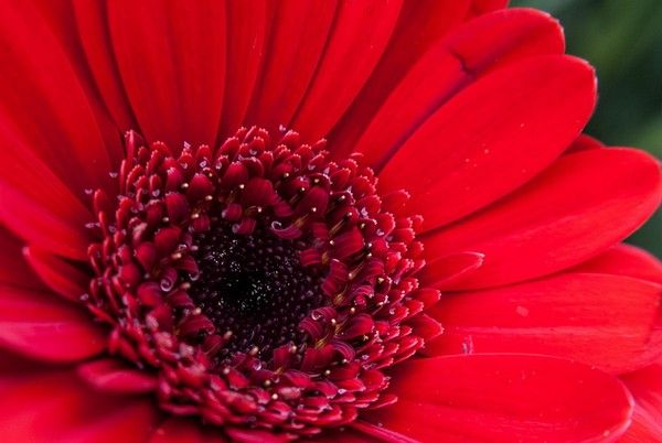 50 Beautiful and Stunning Red Flower Pictures