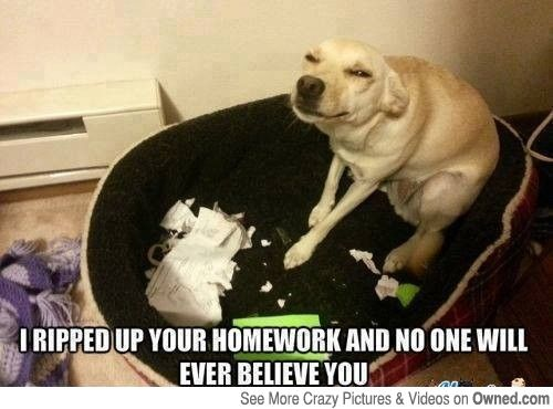 Dog-funny-face-meme- |...
