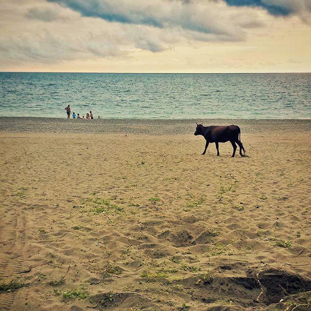 Everybody wants ... #vscophile #vscoeurope #vscocam #vsco #vscogood #vscogrid #igersgeorgia #igersoftheday #igerspoland #kobuleti #georgia #blacksea #beach #beachlife #beachbody #beachday #cow #plażing #hipacontest #hipacontest_august