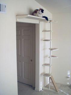 Katzentreppe mit Hochsitz über der Tür