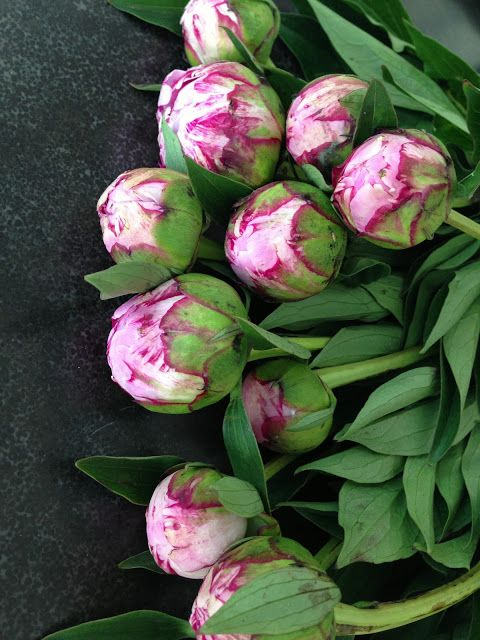 greige: interior design ideas and inspiration for the transitional home #peony