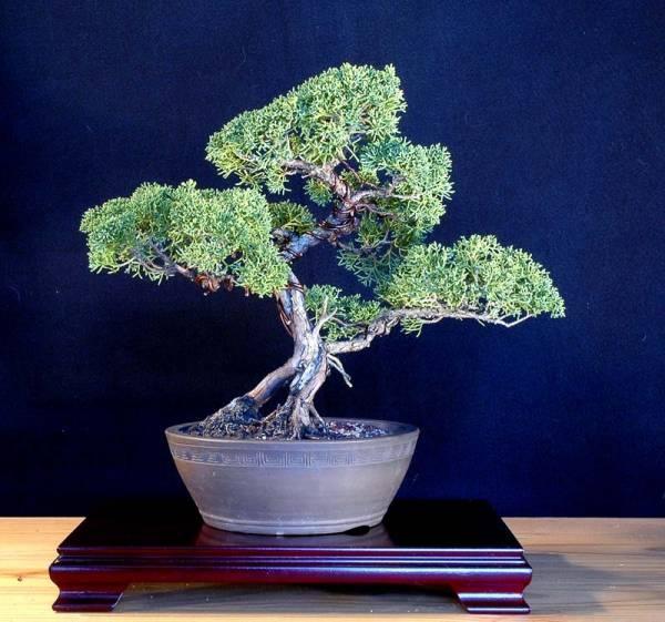 11 best images about bonsai stands to build on pinterest | gardens, Gartengerate ideen